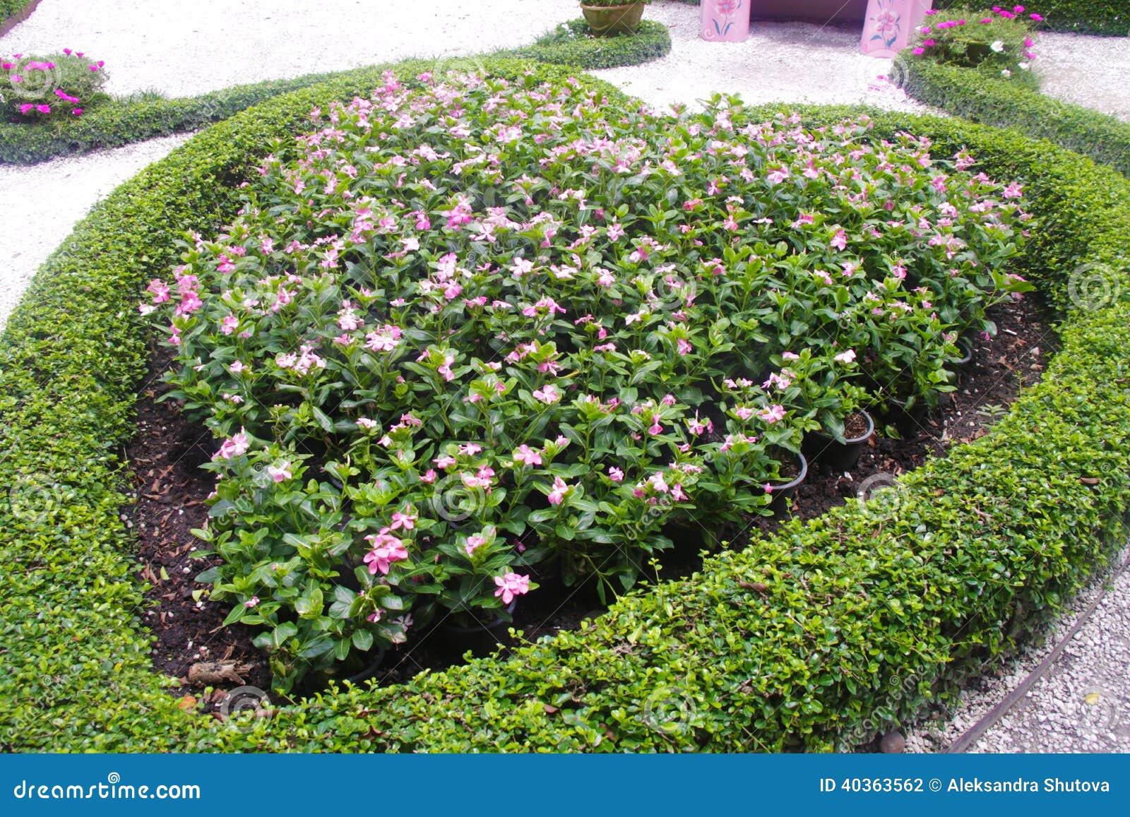 Parterre avec les fleurs roses illustration stock image 40363562 for Parterre de roses photos