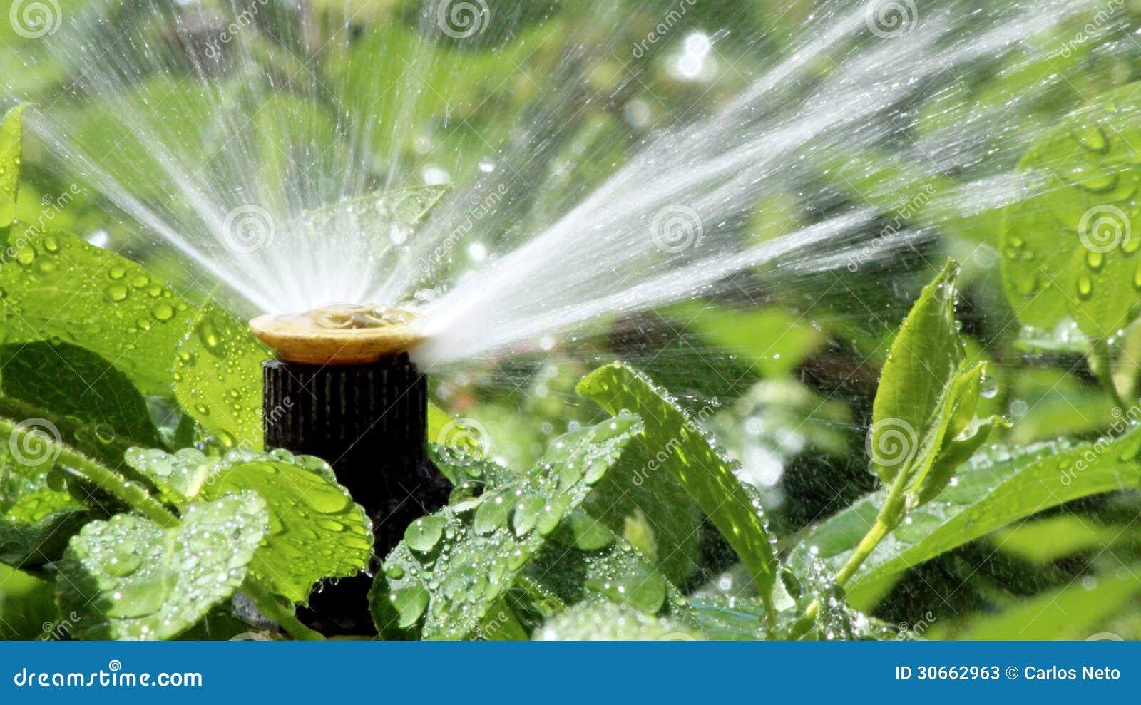 Parterre de arrosage de syst me de jet d 39 irrigation de jardin photos stoc - Systeme irrigation jardin ...