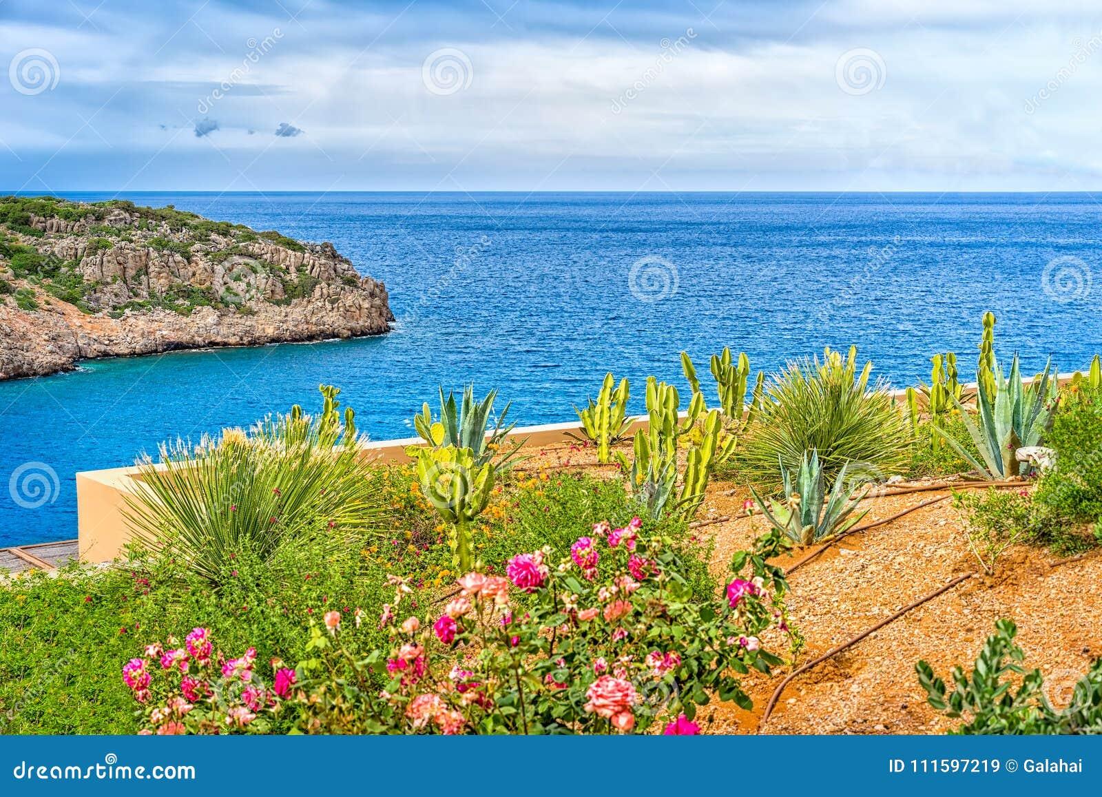 Parterre de floraison sur un fond de paysage de mer, Grèce