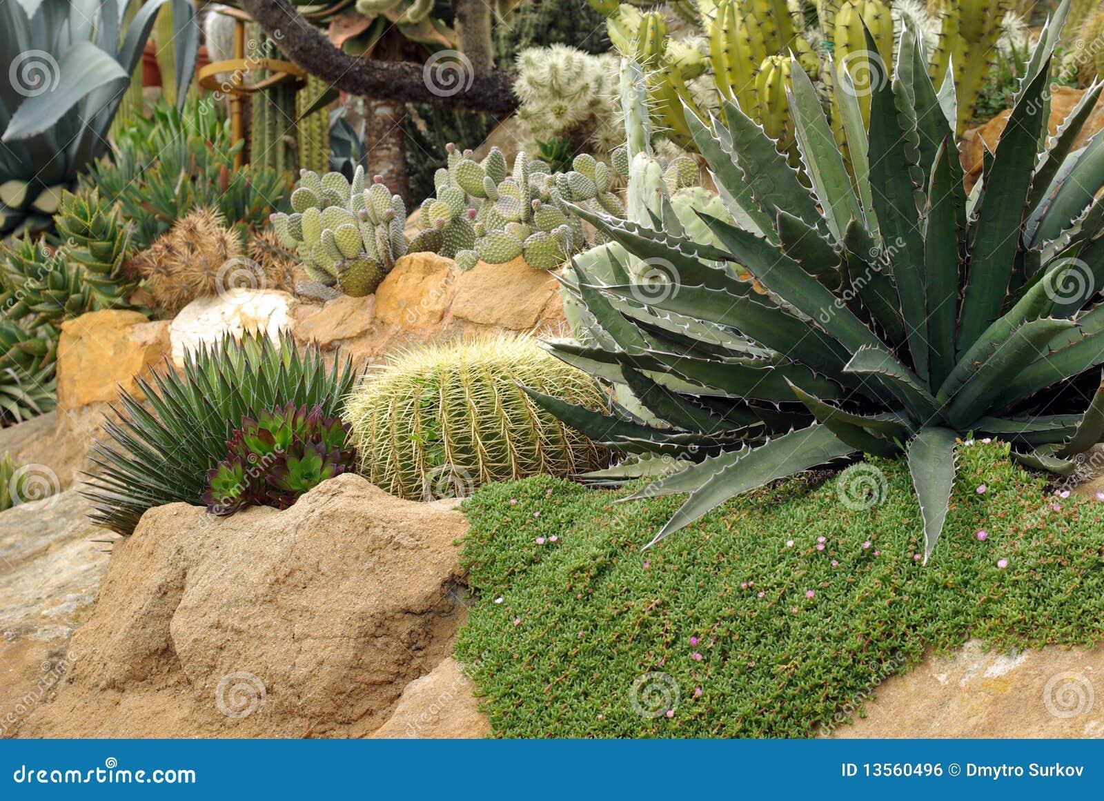 parterre du cactus photo stock image du abstrait floral. Black Bedroom Furniture Sets. Home Design Ideas