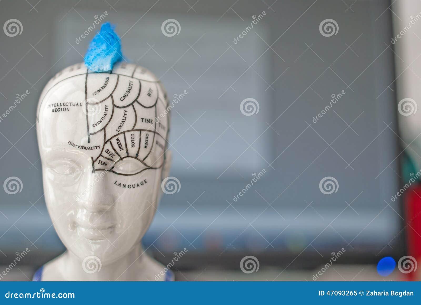 Partes del cerebro ilustración del vector. Ilustración de frontal ...