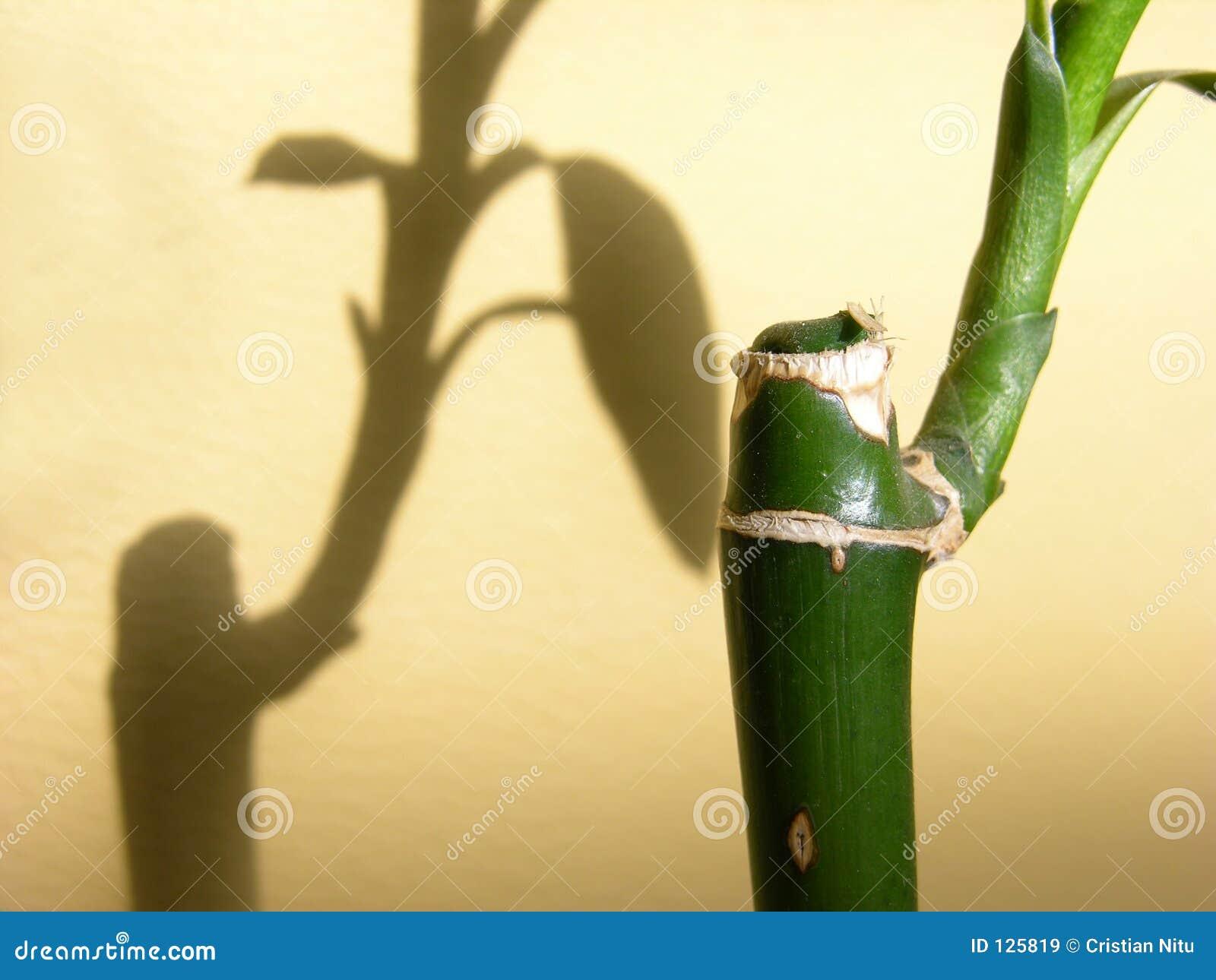 Particolare di bambù