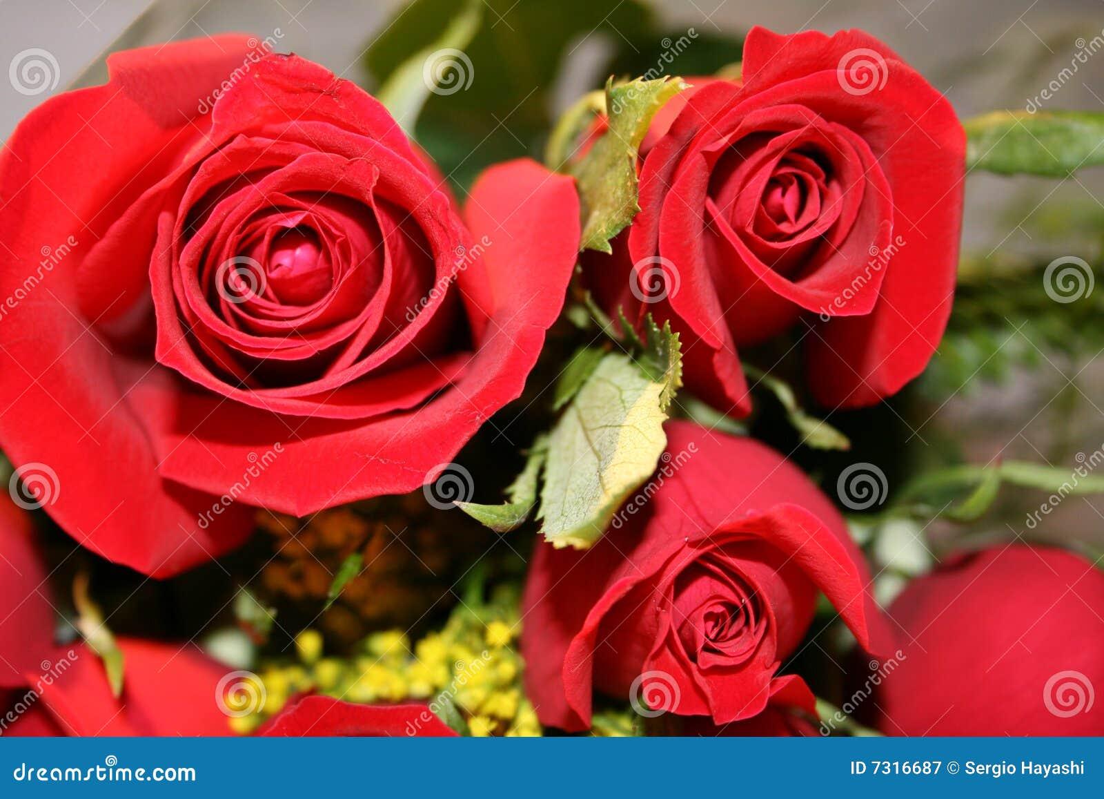 Particolare rosso delle rose