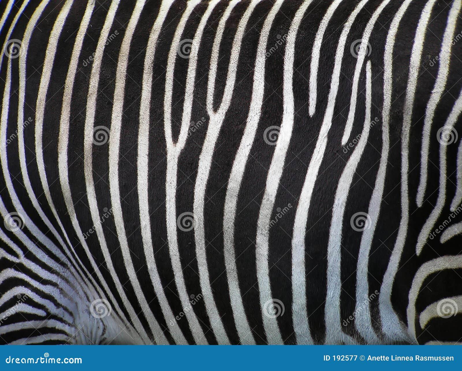 Particolari della zebra
