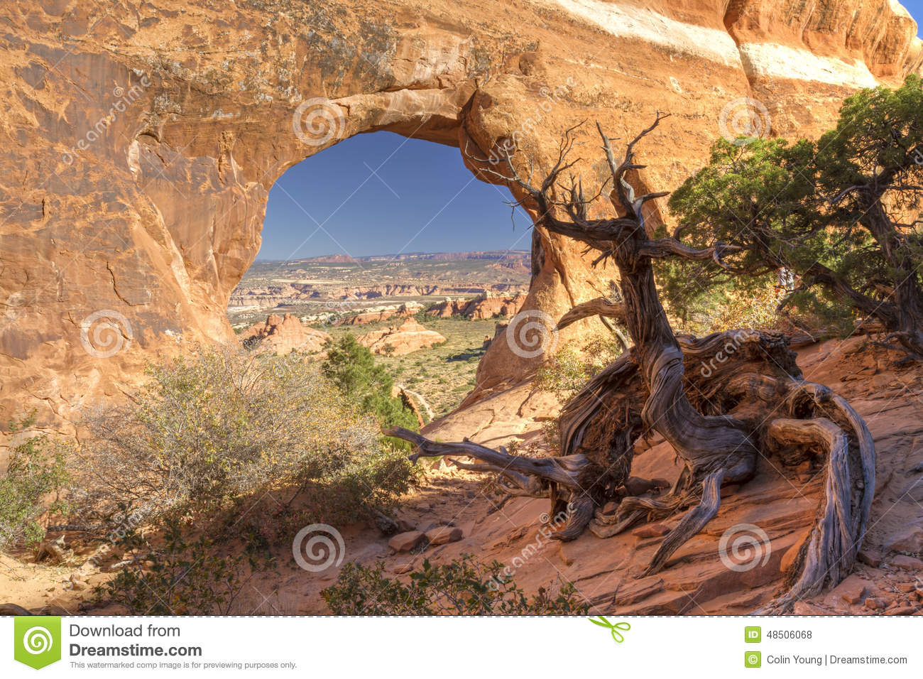 Partition Arch and Walking Juniper Tree