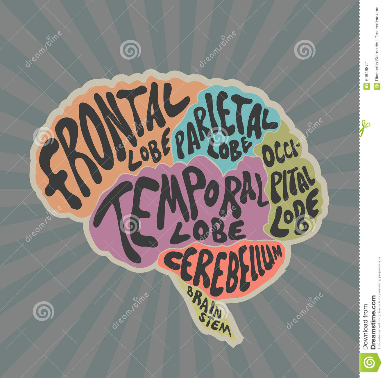 Parts Of The Human Brain Stock Vector Illustration Of Labels 60849877