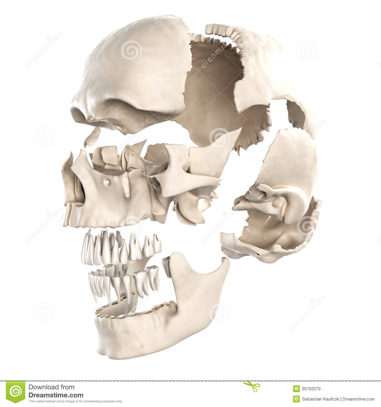 The Parts Of The Human Skull Stock Illustration - Illustration of ...