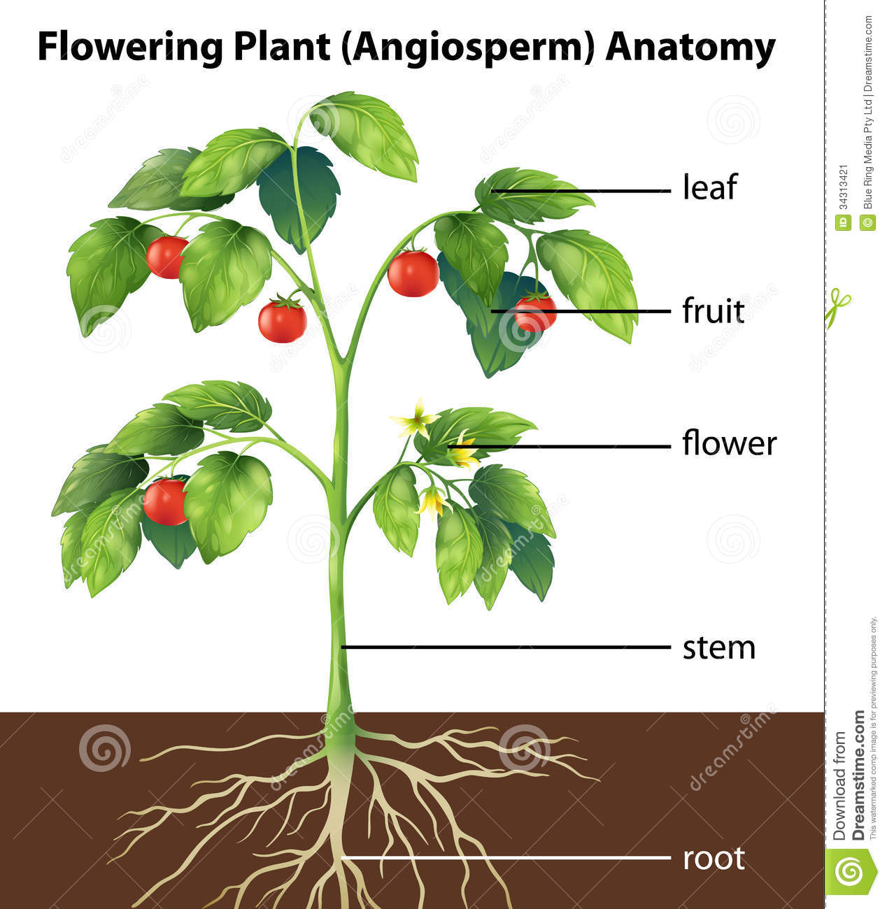 Parts of a plant stock illustration. Illustration of blue - 34313421