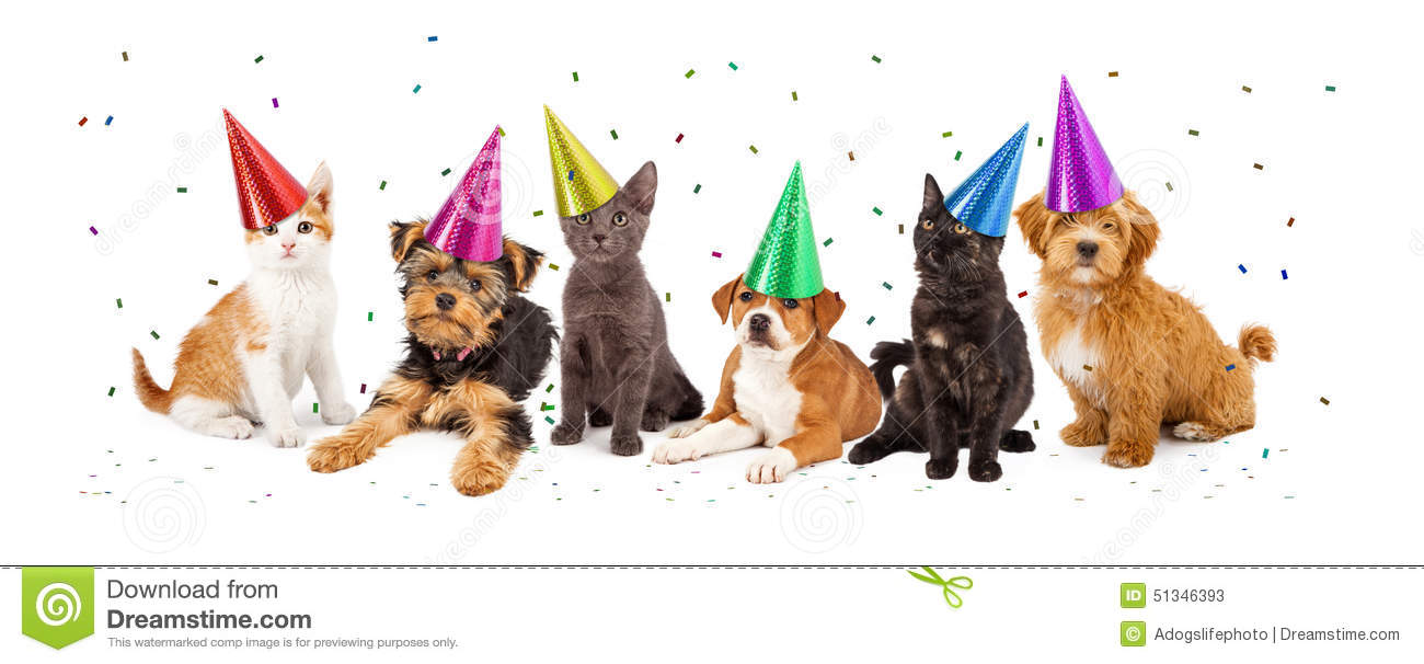 Party Puppies And Kittens With Confetti Stock Photo