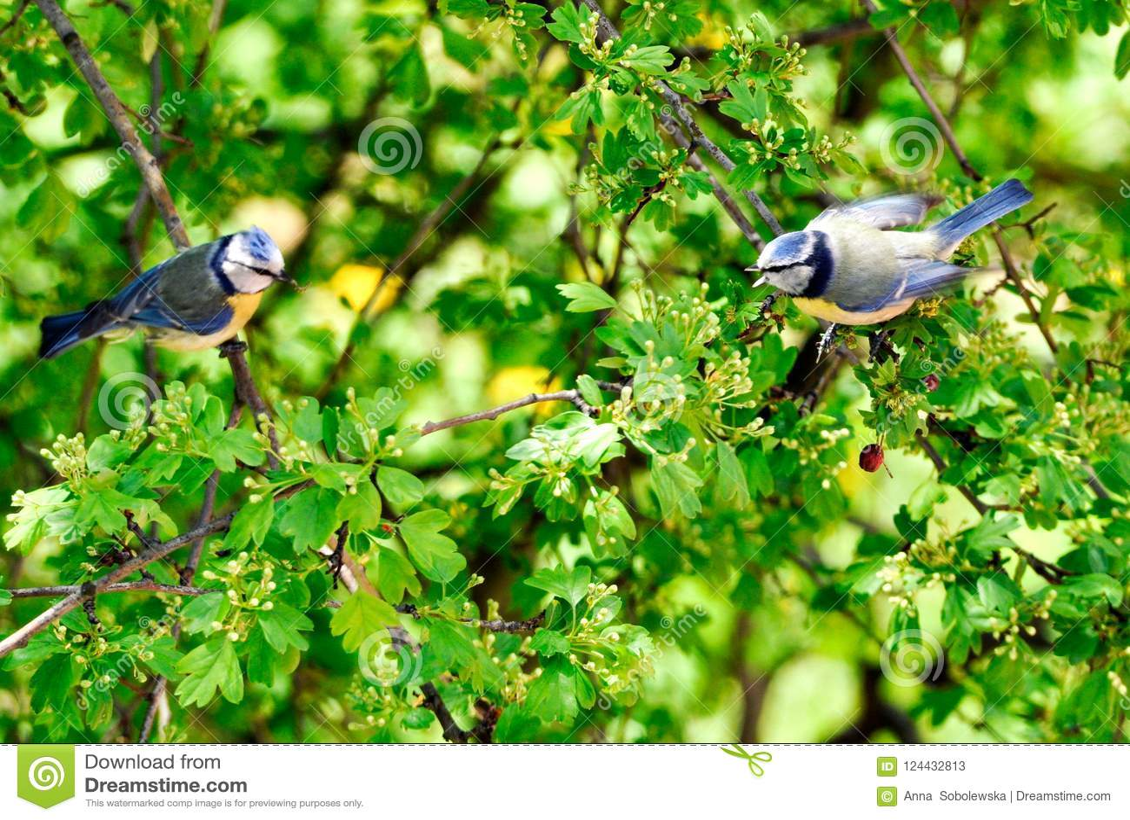 Parus som är viktig på ett träd som talar med dem