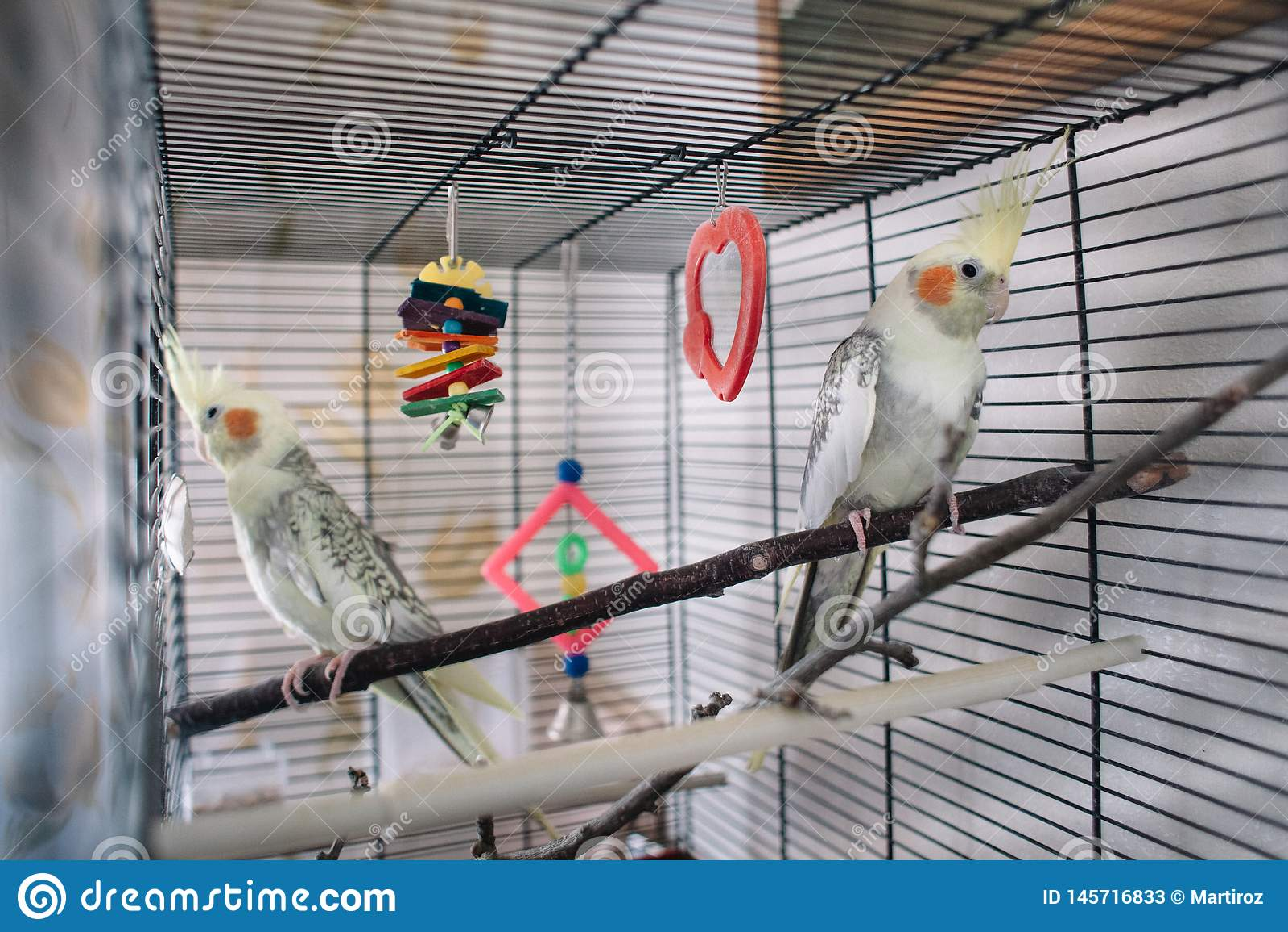Pary piękna biała papuga w klatce