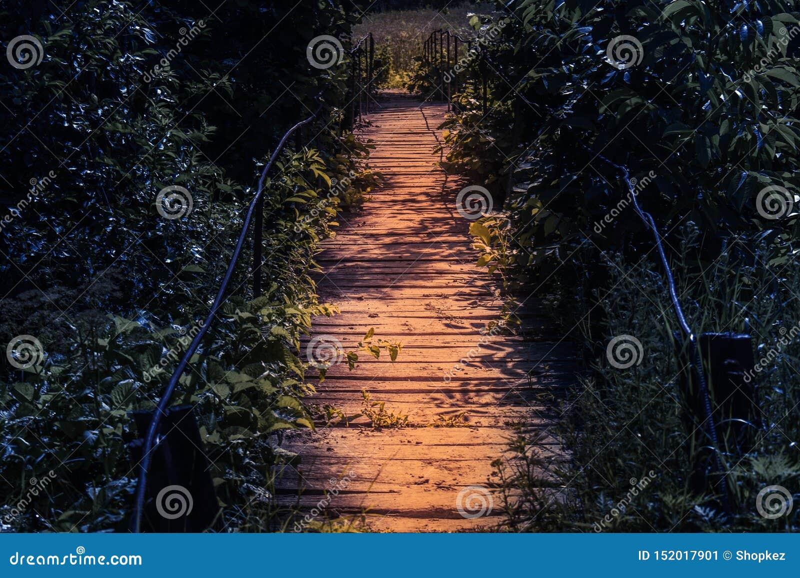 Pasarela de madera del punto culminante en la noche en una atmósfera del cuento de hadas Camino en el bosque fantasmagórico oscur