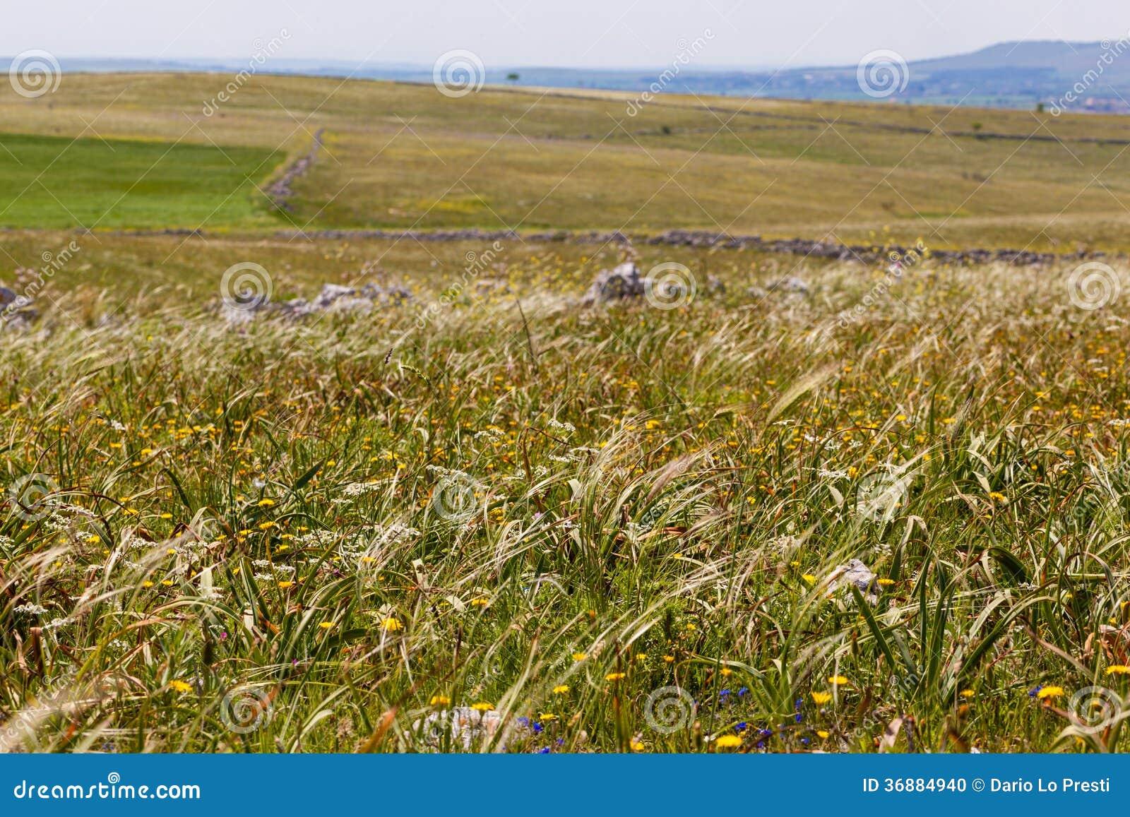 Download Pascoli tranquilli fotografia stock. Immagine di campagna - 36884940