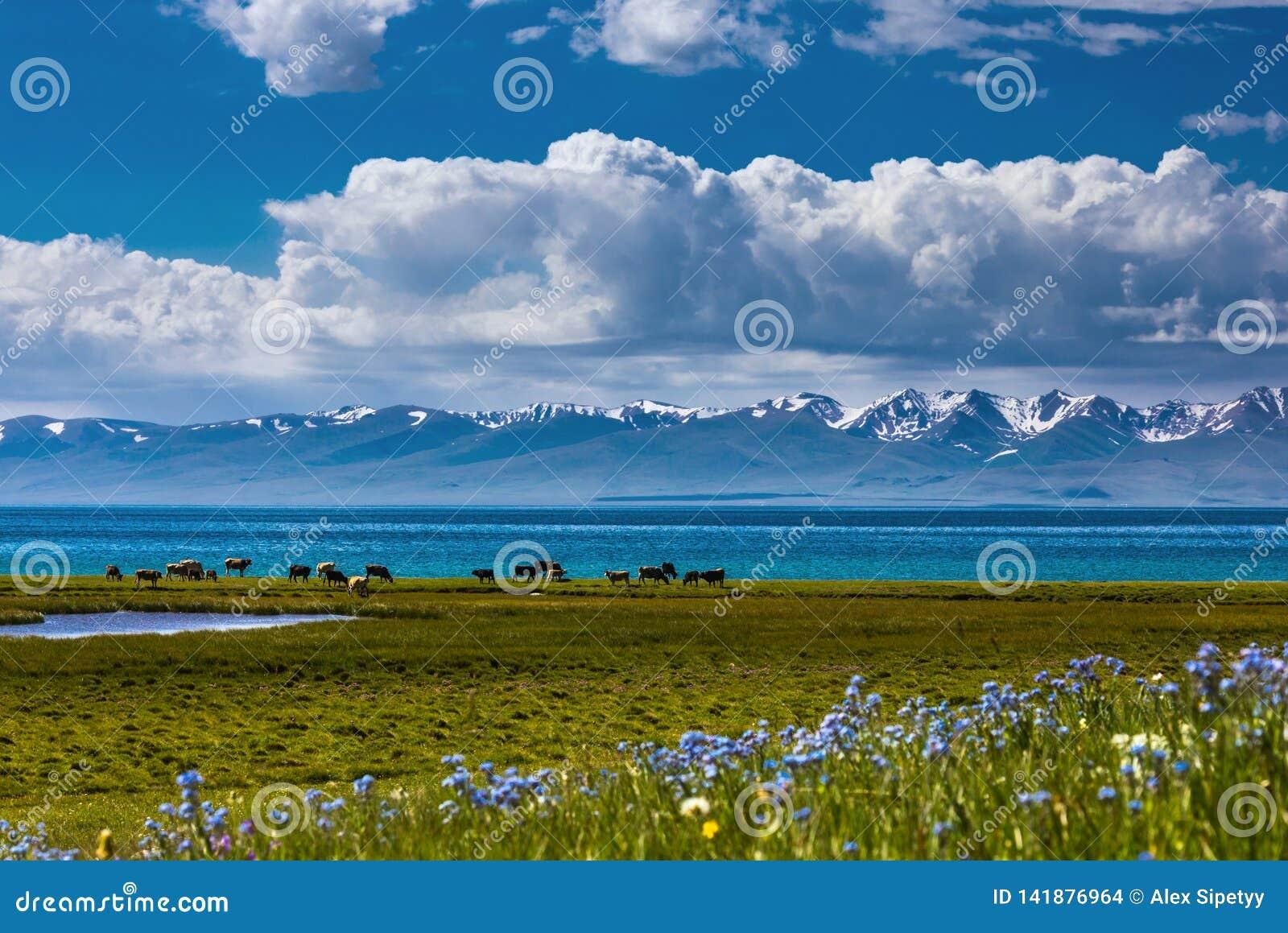 Pascolo tradizionale nelle alte montagne kyrgyzstan Lago Kol di canzone