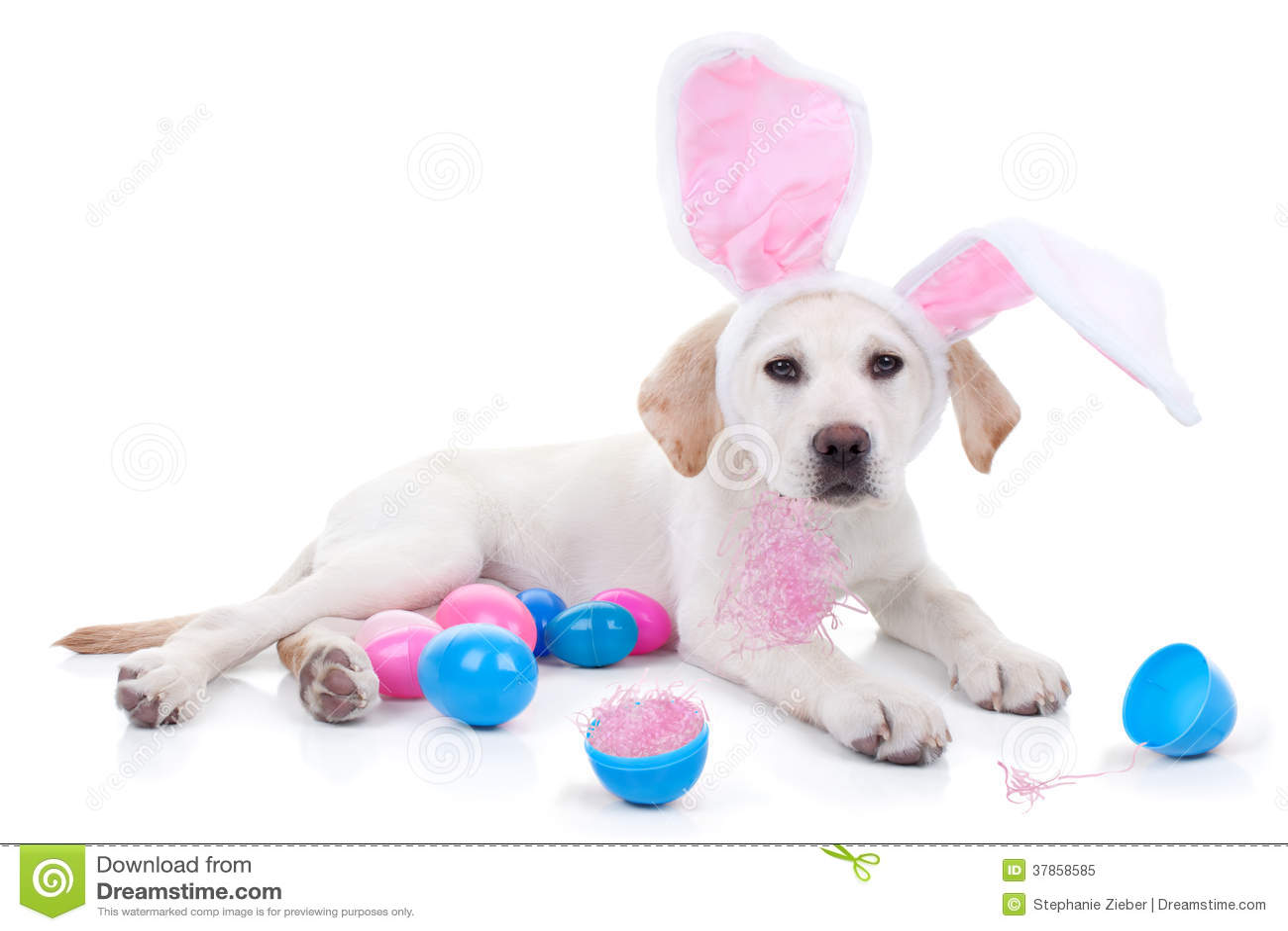 Pasen-Hond
