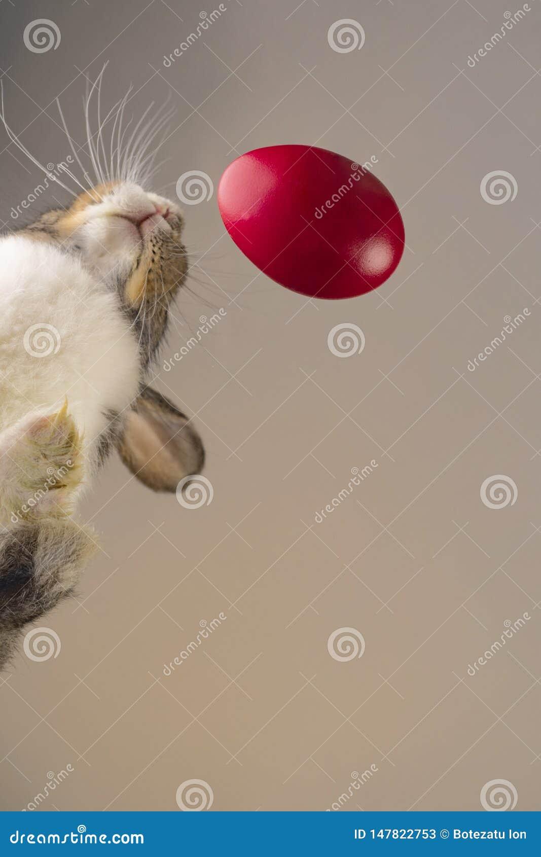 Pasen-konijn dicht bij een rood ei, spruitvorm een benedenhoek