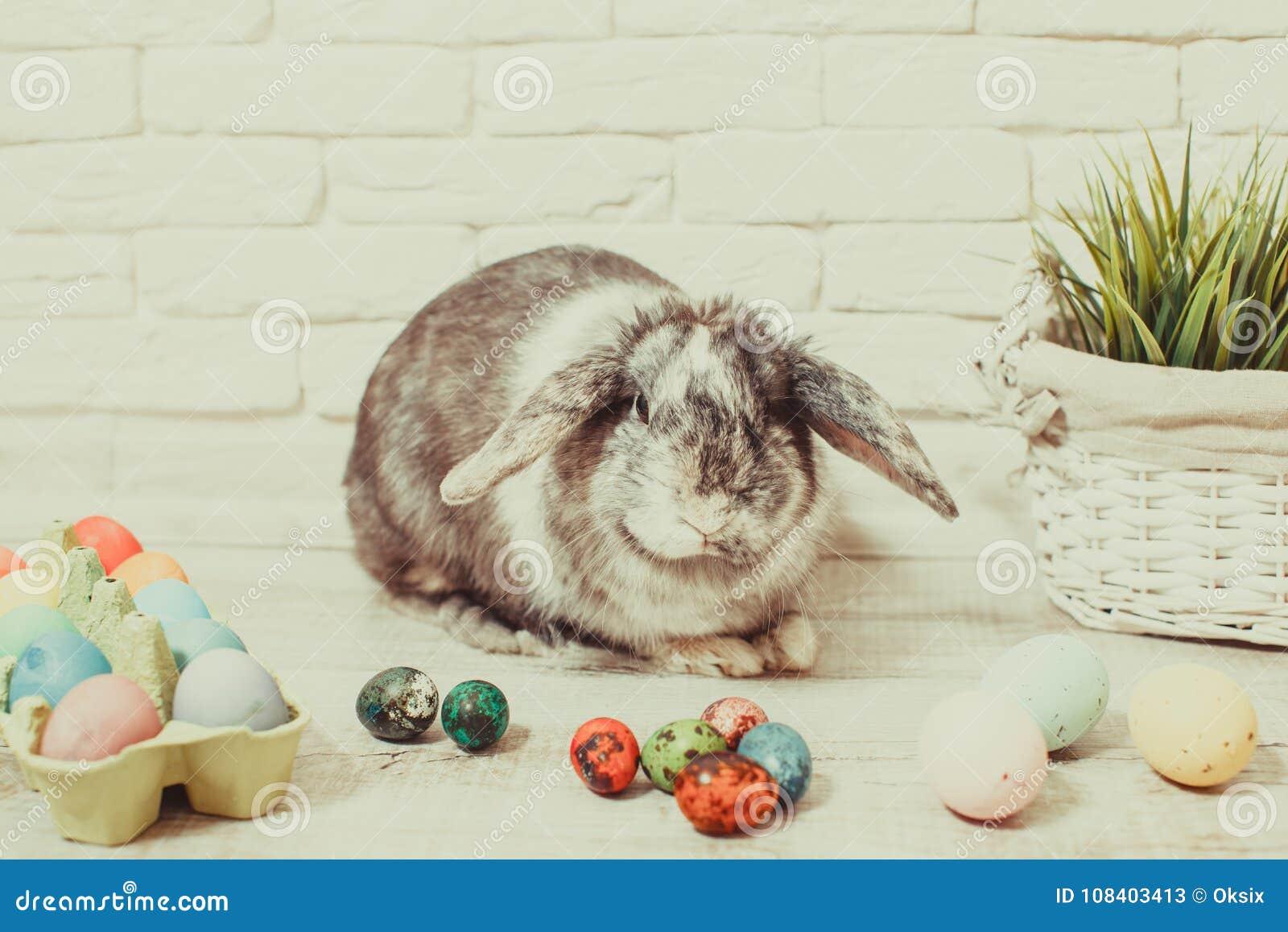 Pasen-konijn in huis