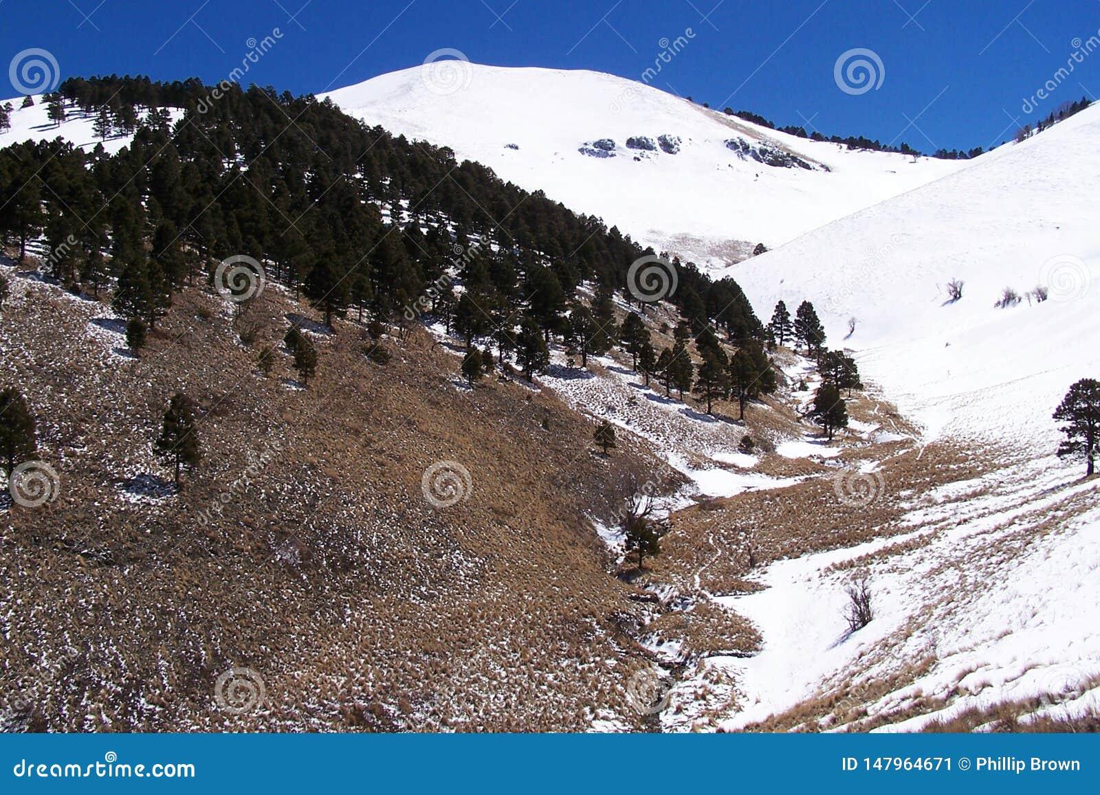 Pasen-sneeuw in de bergen dichtbij ruidoso