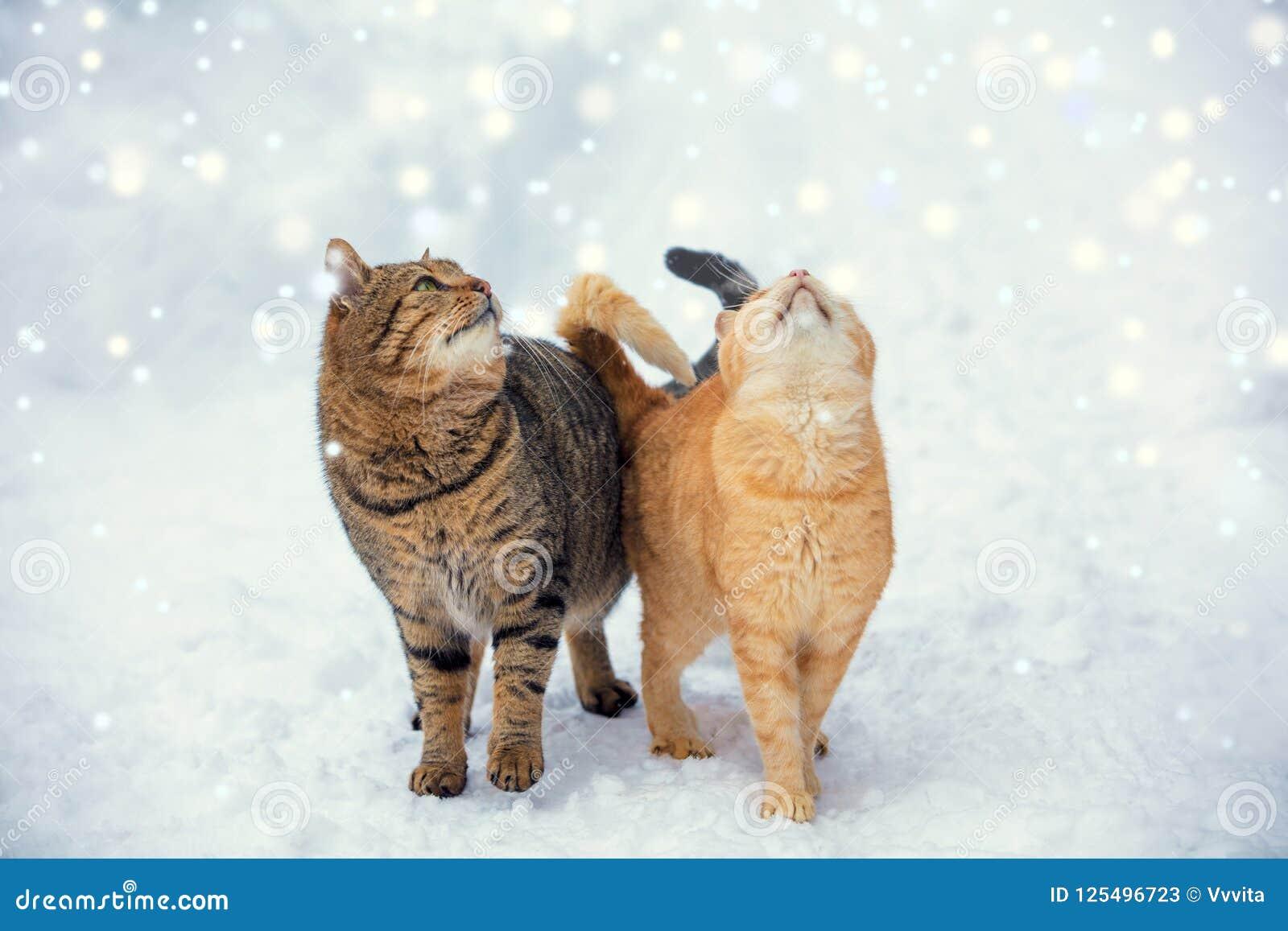 Paseo de dos gatos en nieve durante nevadas