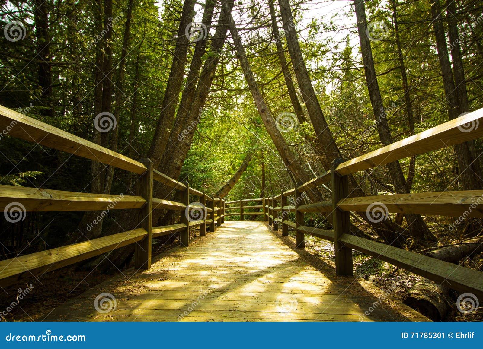 Paseo de la naturaleza en el bosque