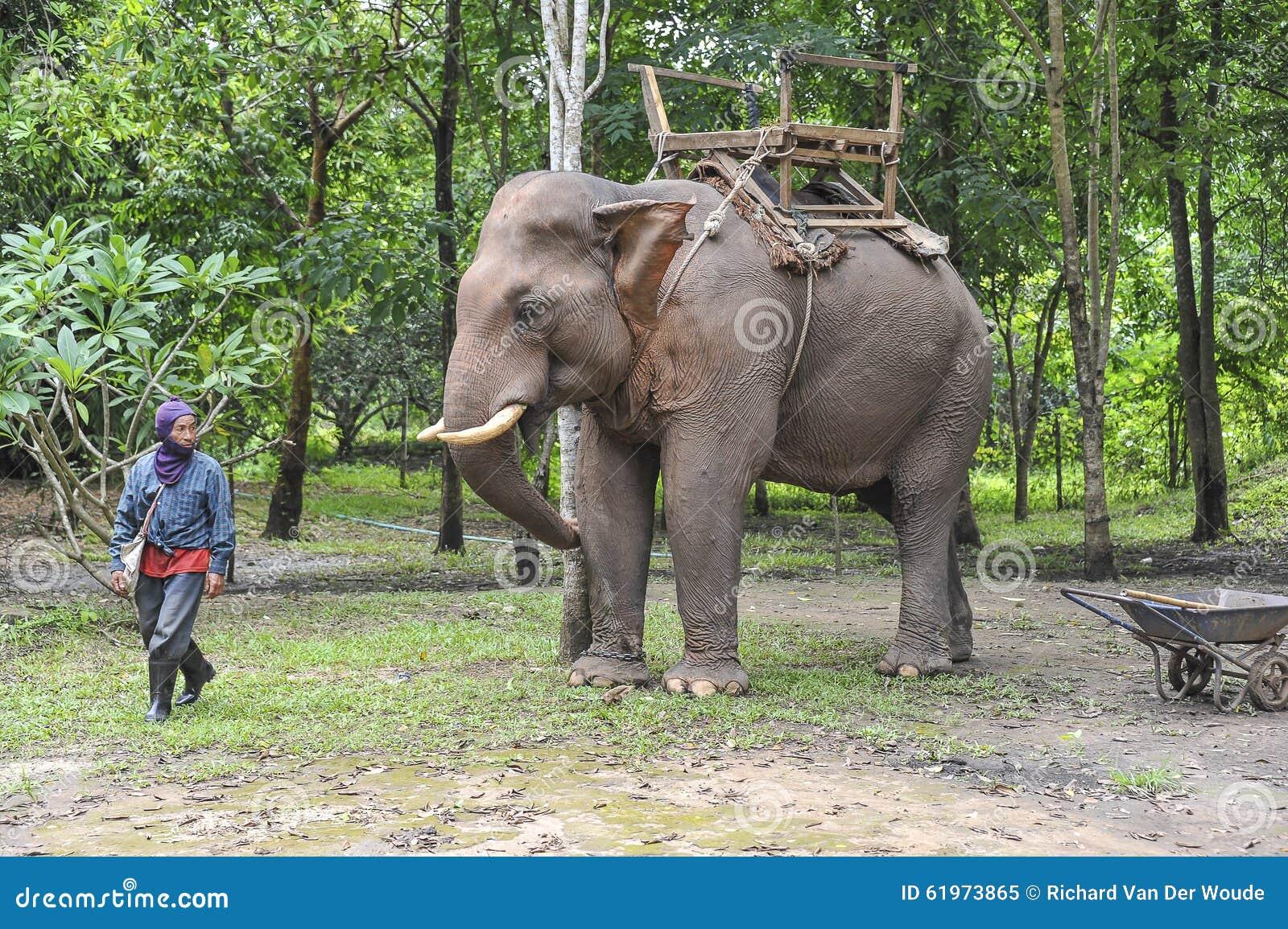 Paseo del elefante