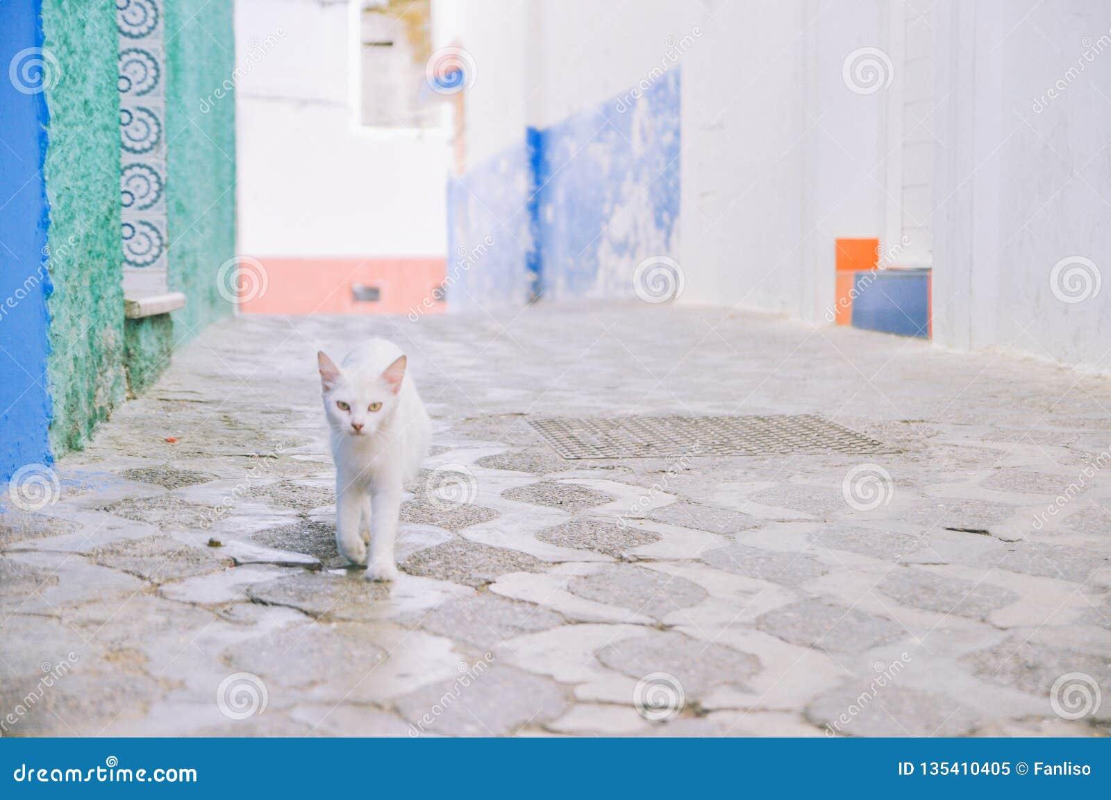 Paseos de un gato blancos en el callejón