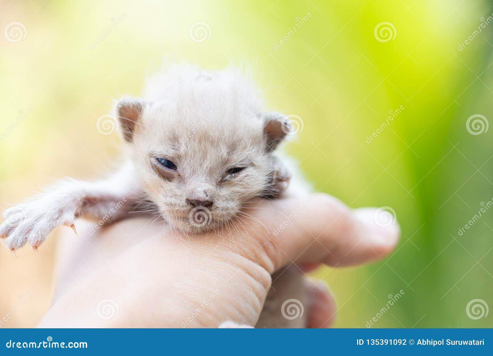 Pasgeboren katje ter beschikking op groene openlucht weinig kat newbie
