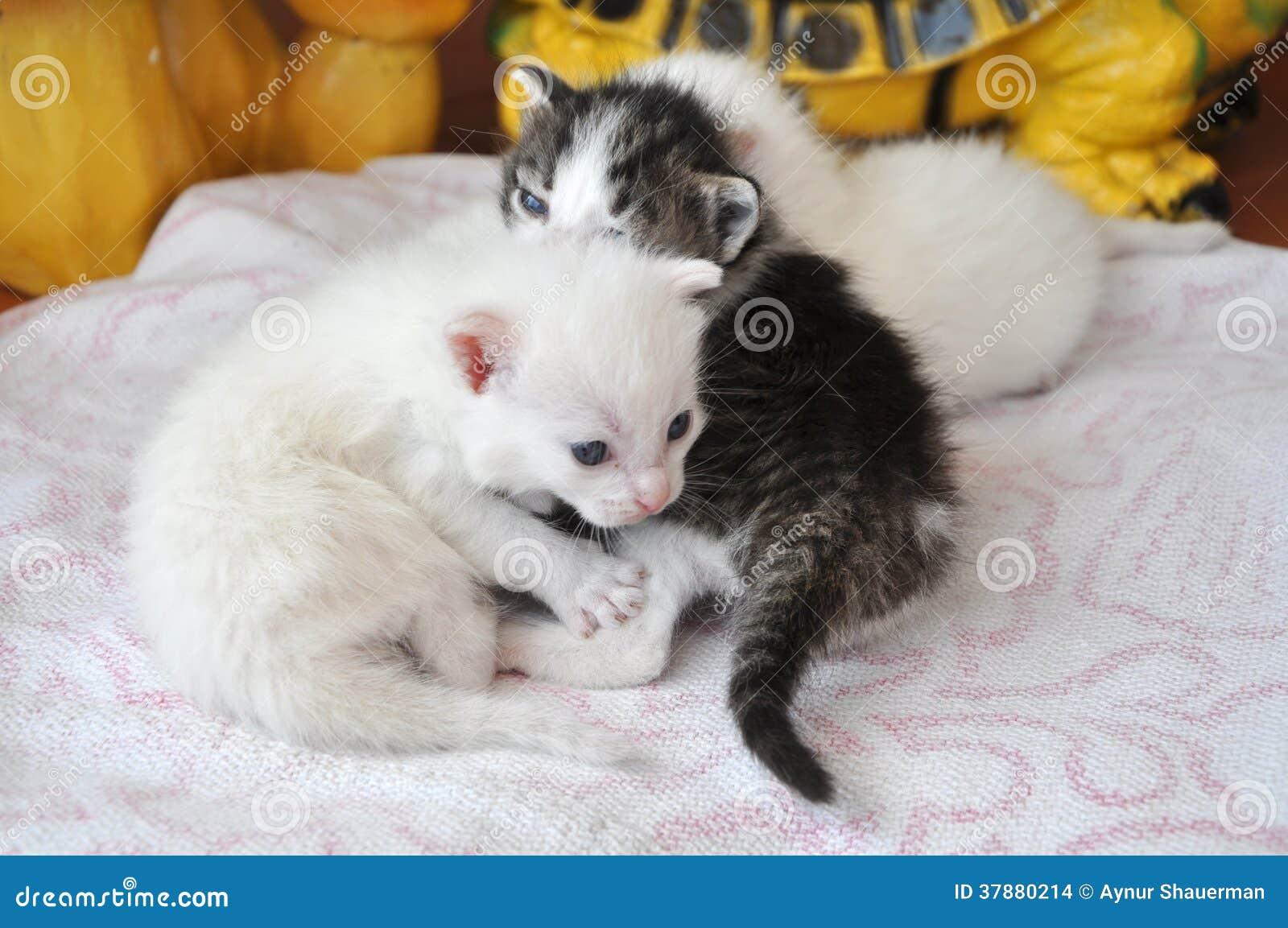 Pasgeboren katjes