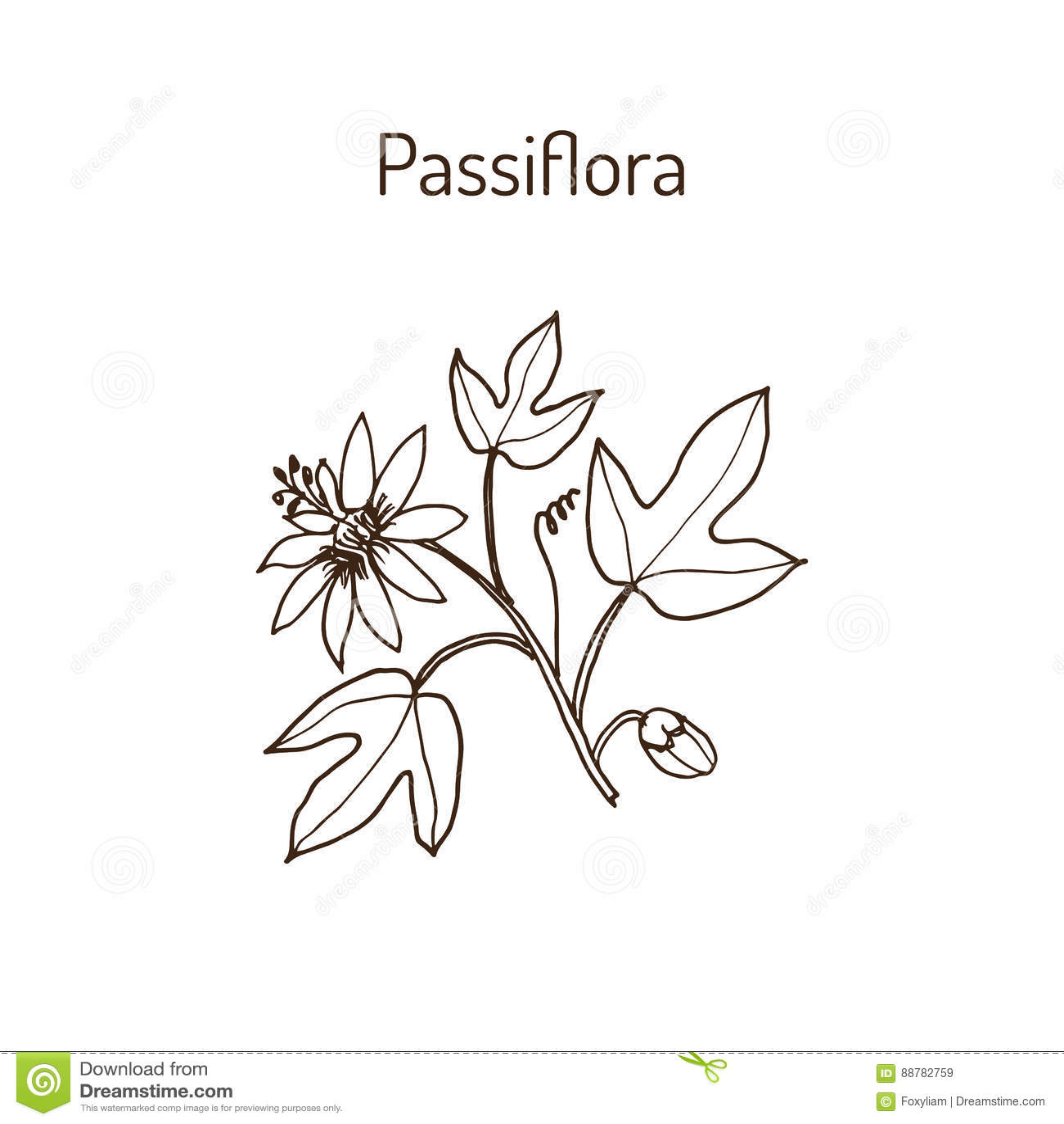 Pasionaria, o flores de la pasión