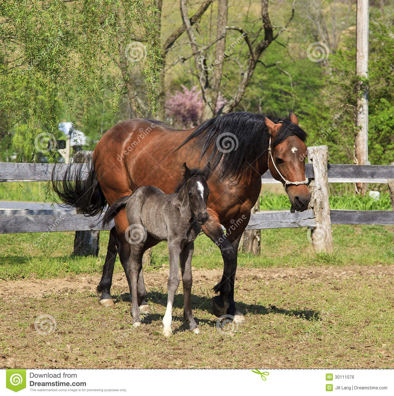 Mare and Her Colt