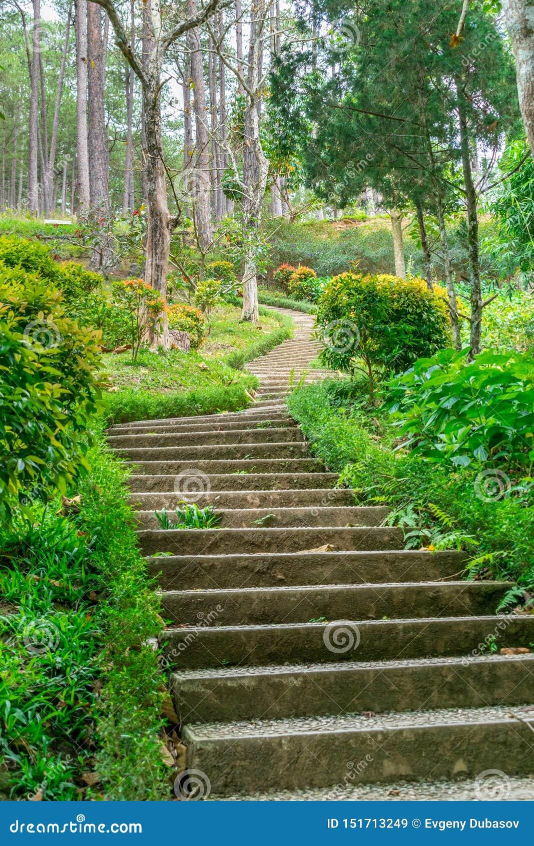 Pasos a una colina en un parque con el césped verde en los bordes