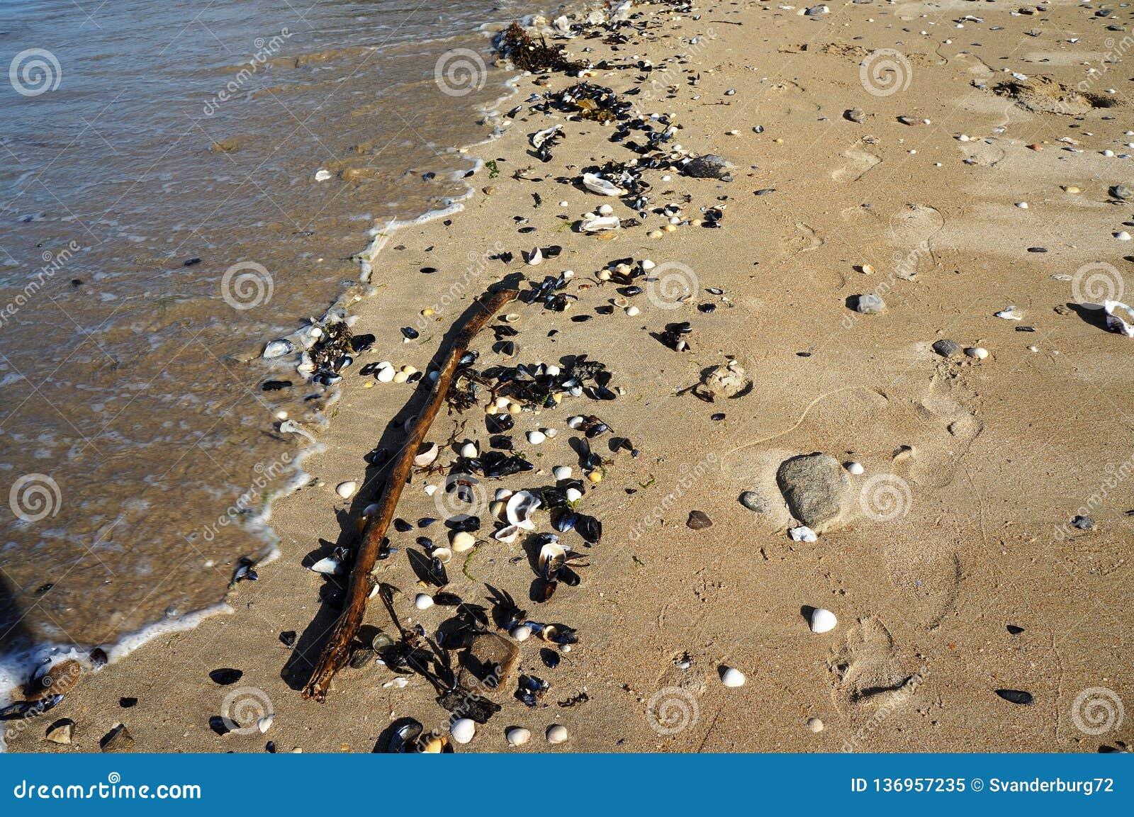 Pasos y cáscaras en la arena en la playa