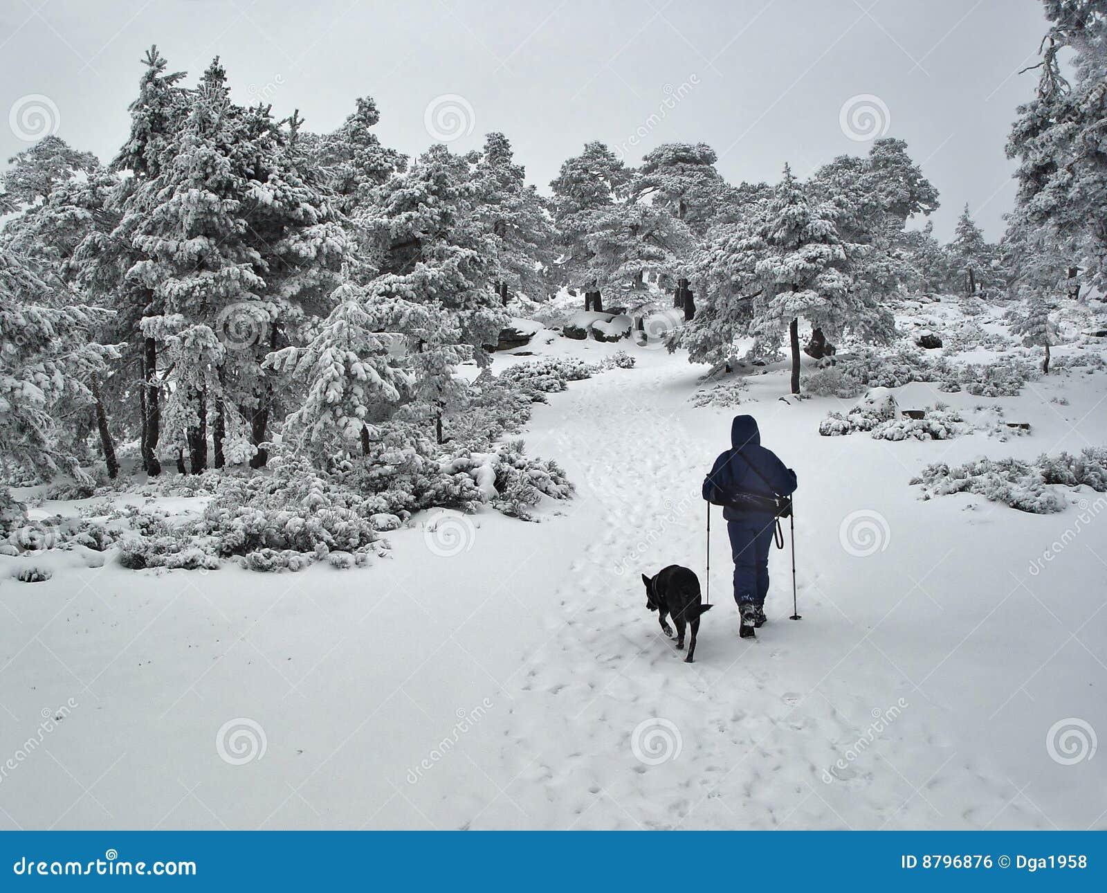 Navacerrada Spain  city photo : ... pass of Navacerrada, Madrid, Spain, may be see this landscapes snow