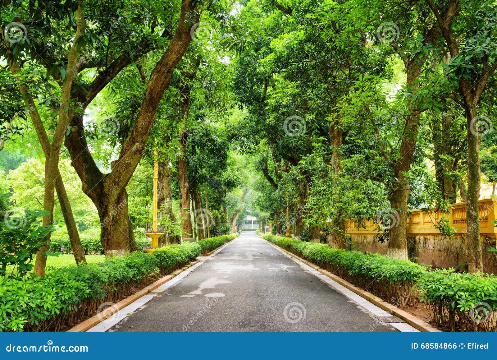 passage couvert louche avec les arbres tropicaux au jardin botanique hano photo stock image. Black Bedroom Furniture Sets. Home Design Ideas