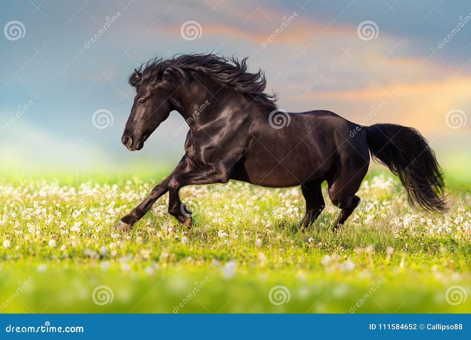 Passage noir de cheval