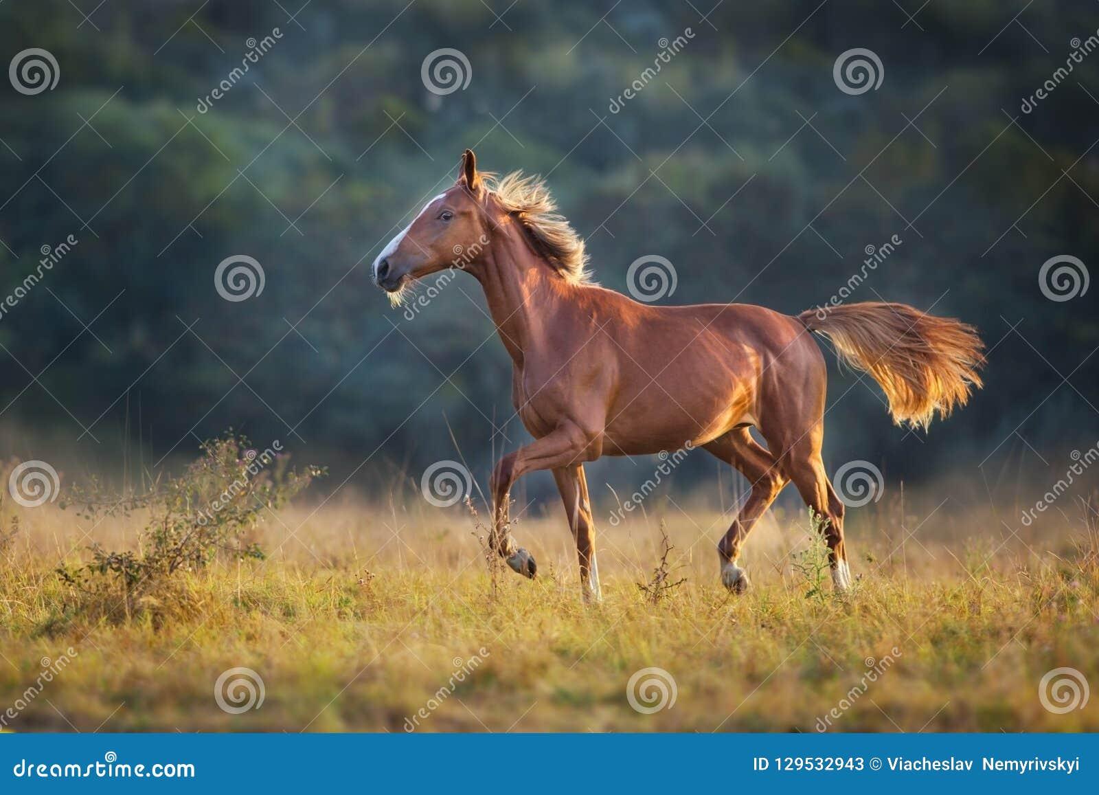 Passage rouge de cheval