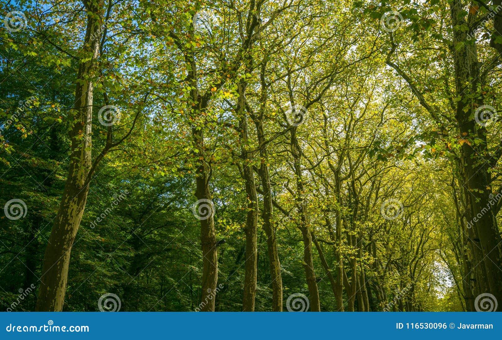 Passagem, pista, trajeto com as árvores verdes na floresta