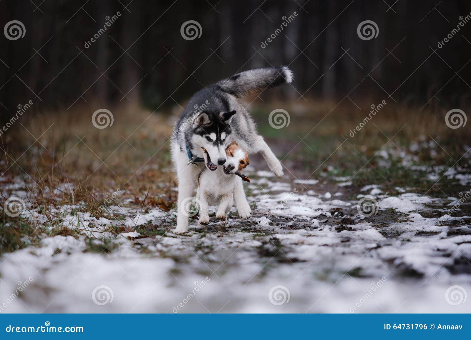 Passeggiata dei cani nel parco nell inverno