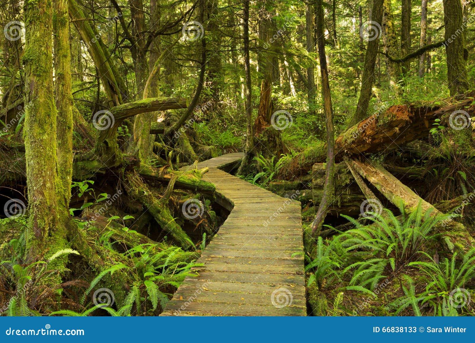 Passeio à beira mar através da floresta úmida luxúria, países da costa do Pacífico NP, Canadá