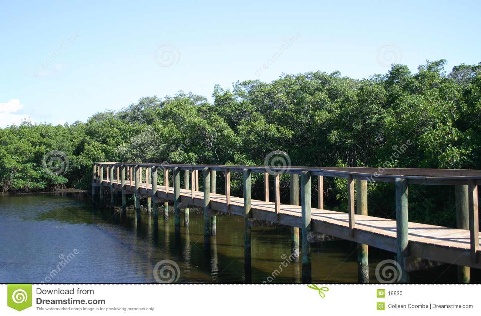 Passeio à beira mar através dos manguezais