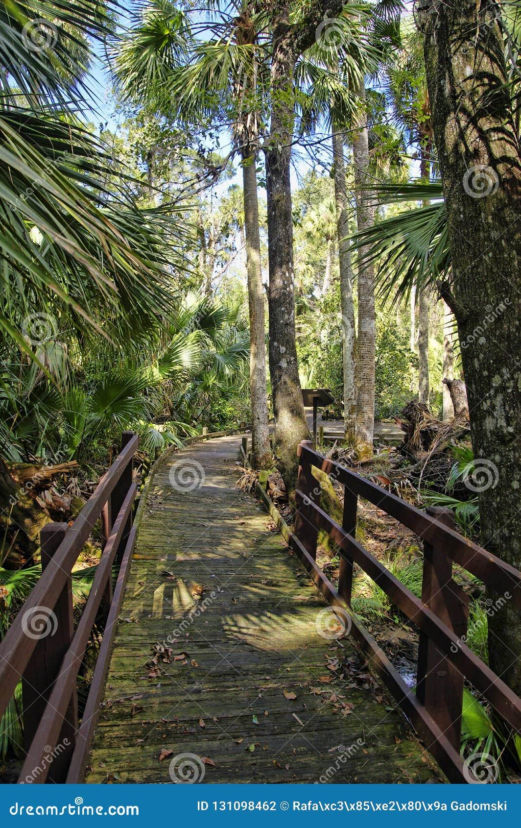 Passeio à beira mar de madeira na área de recreação na floresta nacional de Ocala situada em Juniper Springs Florida