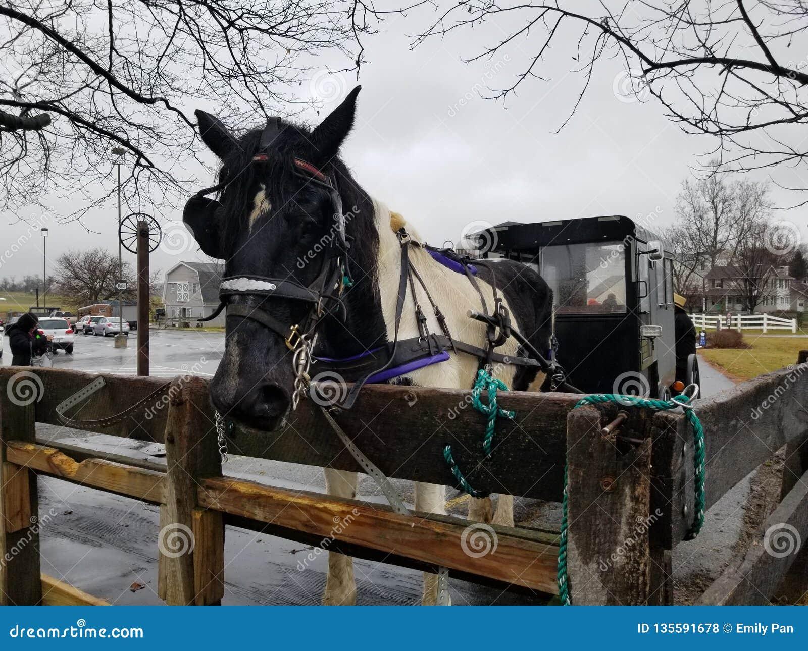 Passeio com erros de Amish