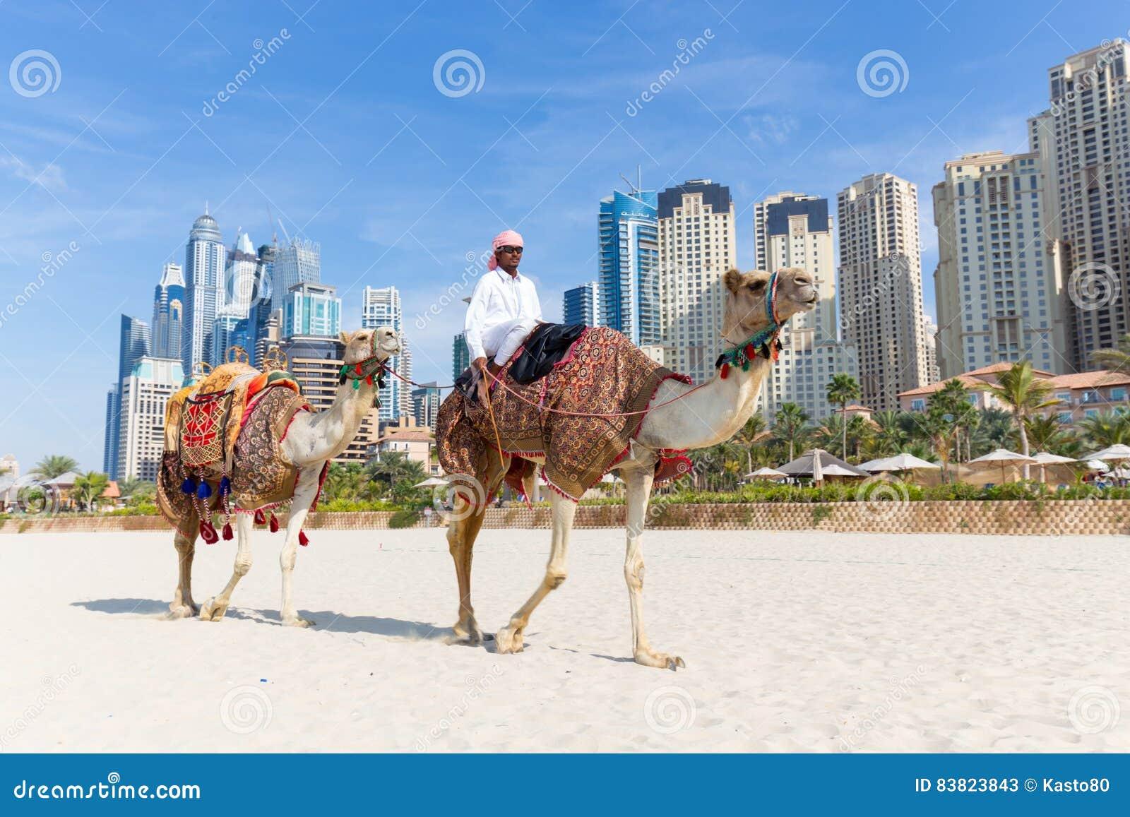 Passeio de oferecimento do camelo do homem na praia de Jumeirah, Dubai, Emiratos Árabes Unidos