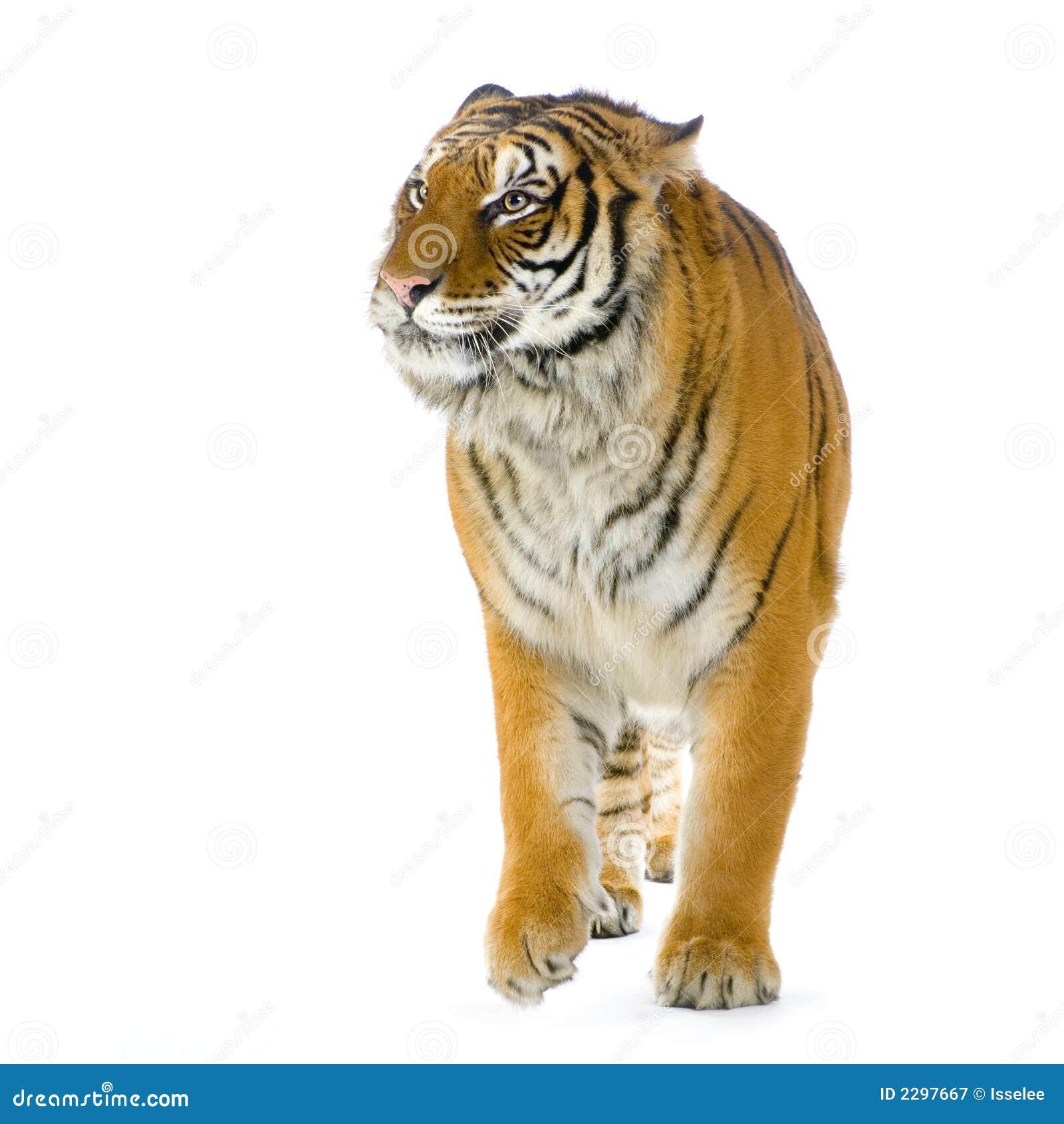Passeio do tigre