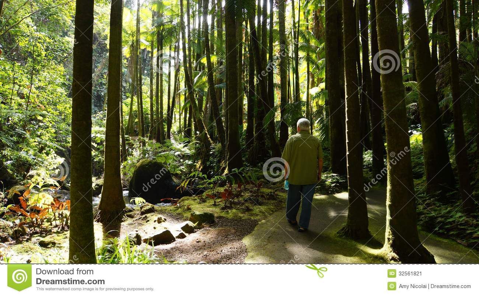 Passeio na floresta da palma