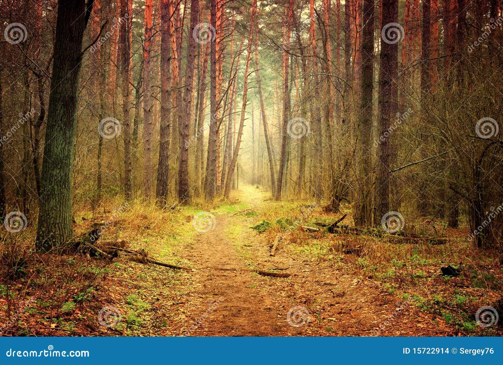 Passeio na floresta místico