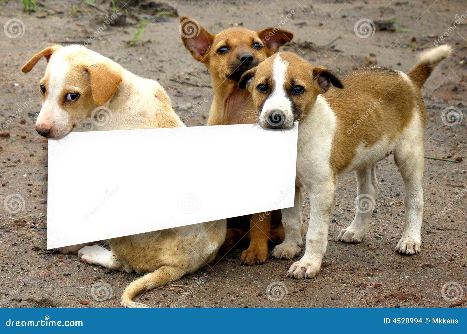 Passen Sie von den Hunden auf