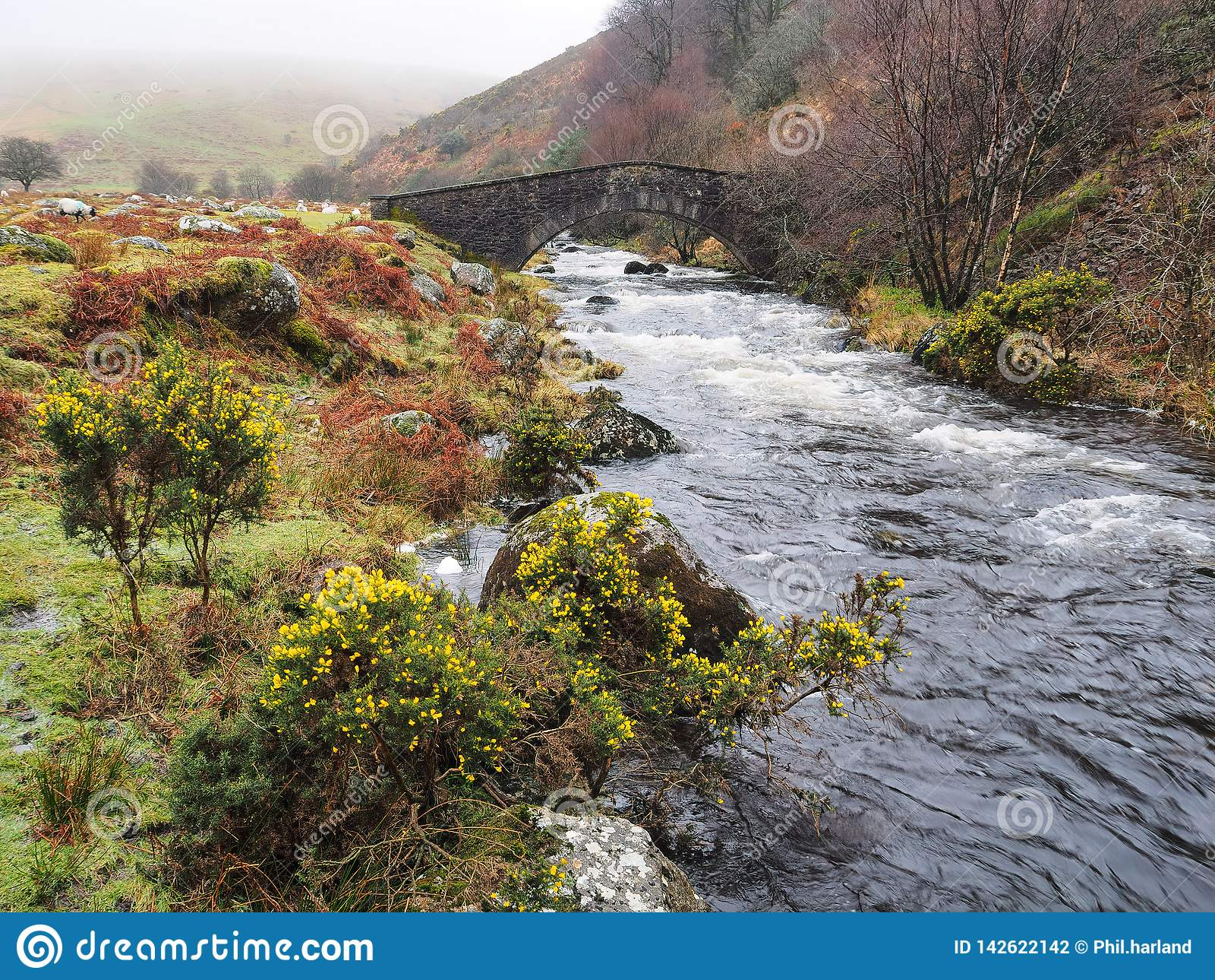 Passerella di pietra sopra il fiume ad ovest di Okement, parco nazionale di Dartmoor, Devon, Regno Unito dell arco