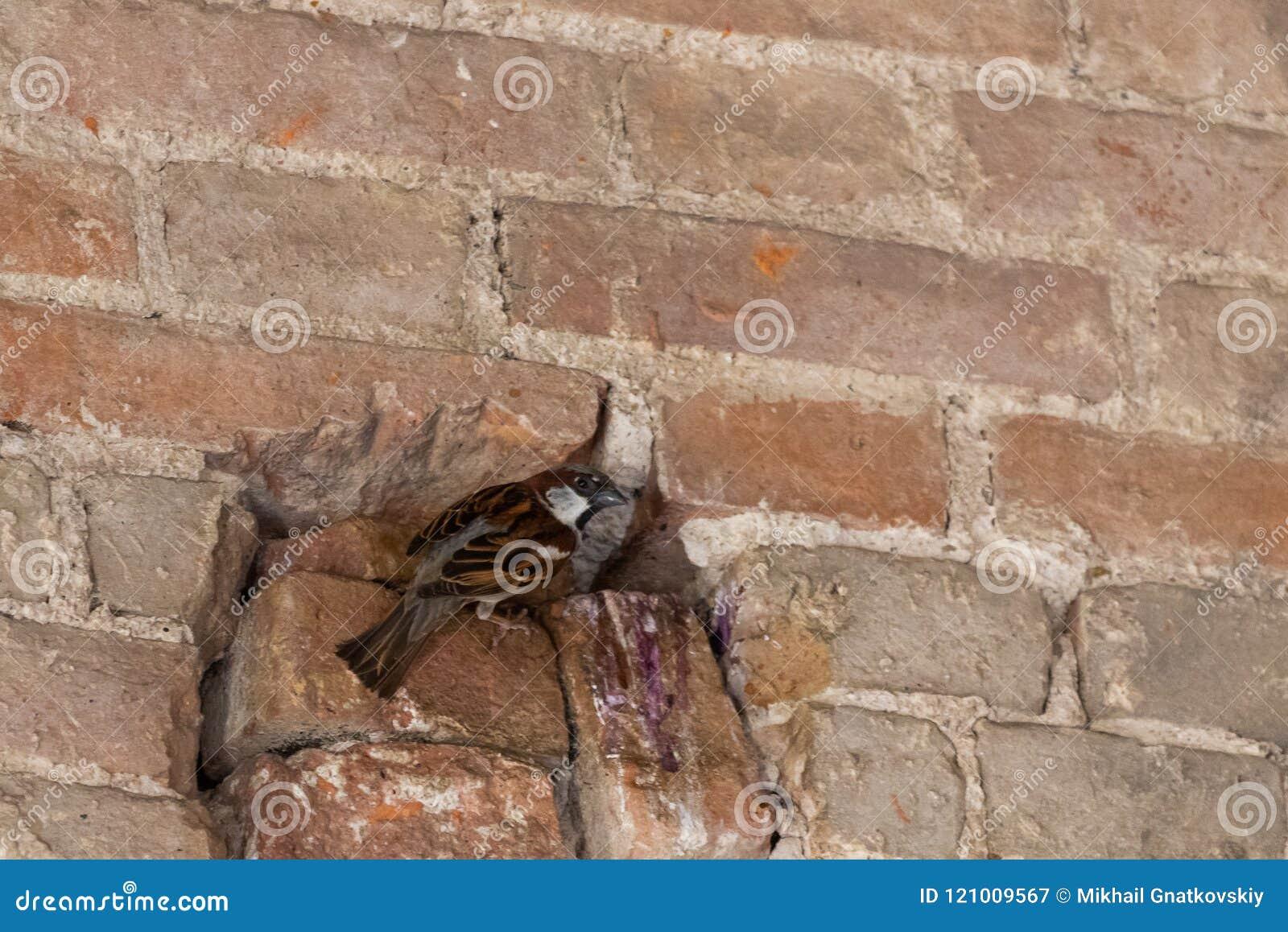 Passero nel foro Nido nella parete