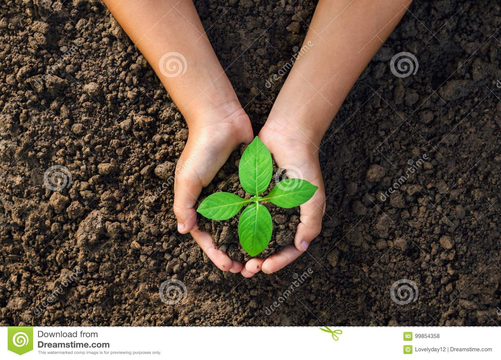 Passi la plantula della tenuta per la piantatura nel worl di verde di concetto del suolo